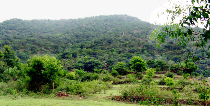 Attapady hill planted with trees