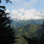 Pines and the greenery of mountains of Kashmir